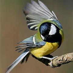 Foto natečaj: Ptice 014