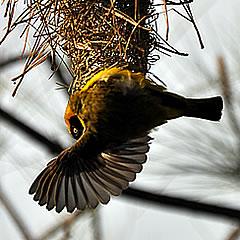 Foto natečaj: Ptice 016